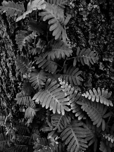 Blackandwhite Leaves Variety Contrast Dirty Focus Dark