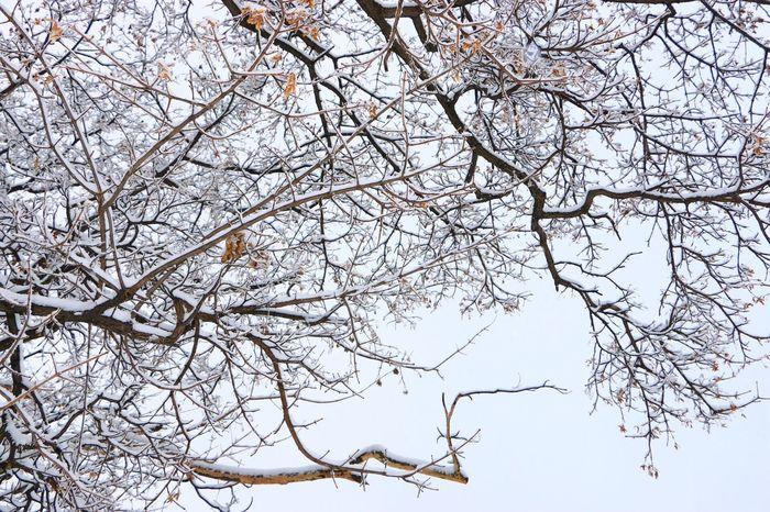 一番言って欲しい言葉を、聞けなかった。 言わないのが悪いのか、期待した自分がバカなのか。 答えは後者にしておこう。 Winter Nature Hokkaido Hokkaido Japan Cold 나무 겨울 말 하늘 공원 눈 旭川 公園 Canon