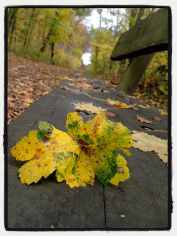 EyeEm Nature Lover Philosophenwald Gießen November
