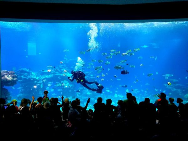 Large Group Of People Silhouette Fish Crowd Sea Life People spectator Swimming Audience Scuba Diving Adults Only Adult