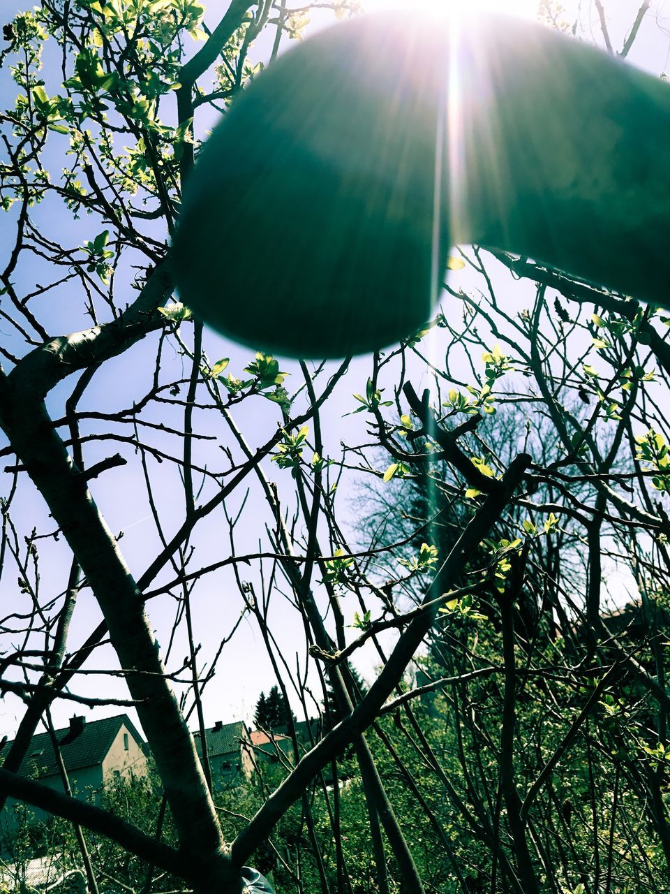 tree, growth, no people, branch, low angle view, sunlight, green color, day, nature, outdoors, beauty in nature, plant, leaf, sky, clear sky, close-up, freshness
