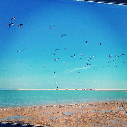تصويري  طيور نورس أنا محمد_السنيدي الرياض كشته زيلامسي كوكا_كولا دبي بحر شاطي