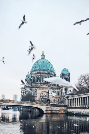 Seagulls flying over spree river by berlin cathedral against clear sky