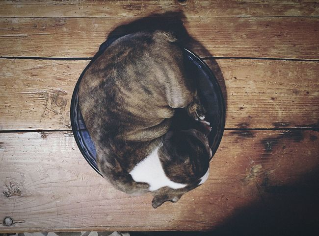 Sleeping Puppy In his Food Bowl. Fast Asleep Dreamworld No Worries Dogslife