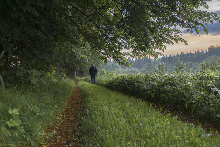 Rear view of man walking on field by trees against sky