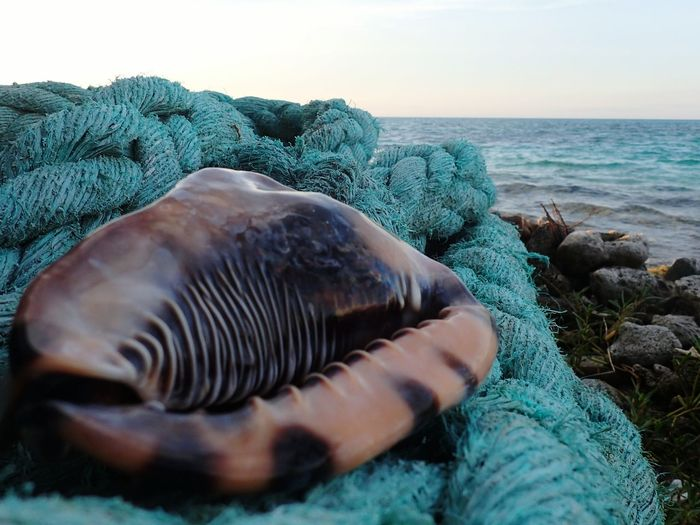 Close-up of shell and rope against clear sky