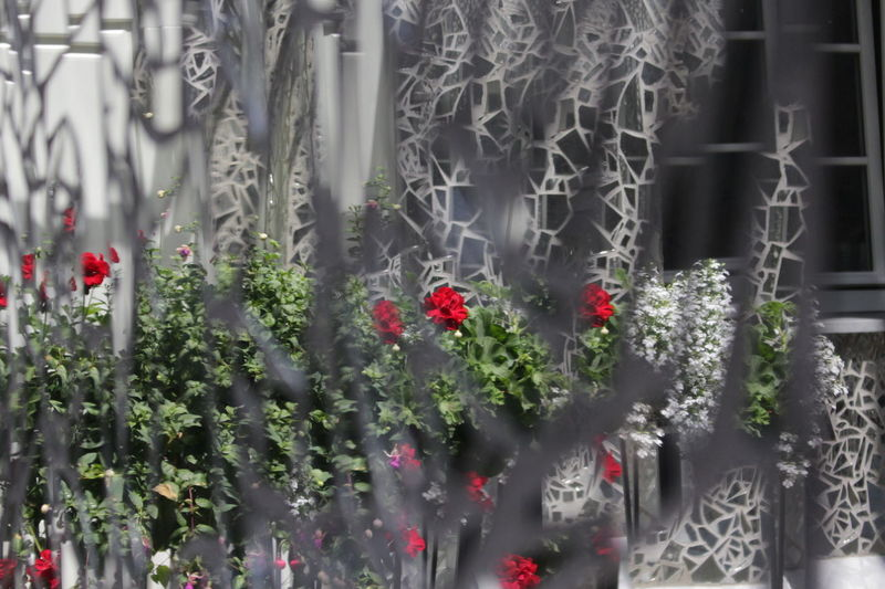 Flowers Flowers Reflections Mirror Mirrors Pieces Pieces Of Glass Reflection Relaxing Roses