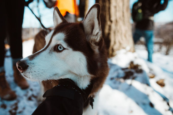 Animal Themes Close-up Cold Temperature Day Dog Domestic Animals Focus On Foreground Human Body Part Human Hand Mammal Nature One Animal One Person Outdoors Pets Real People Snow Winter
