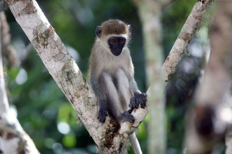 Monkeys sitting on branch