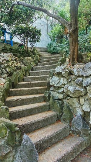 Stone steps leading to trees