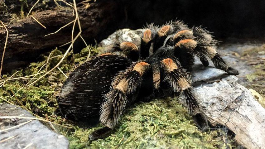 Spider Arachnid Arachnophobia Arachnida