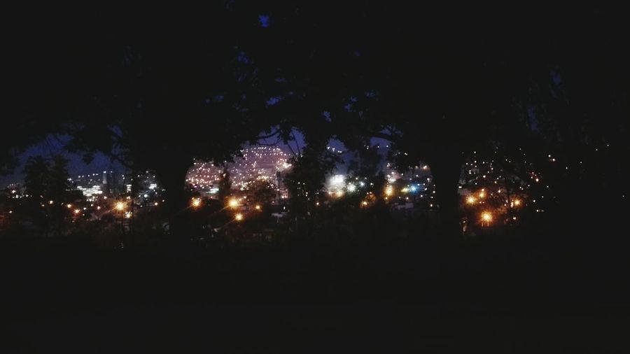 Lo mejor de la ciudad son sus luces. Night Tree Lights