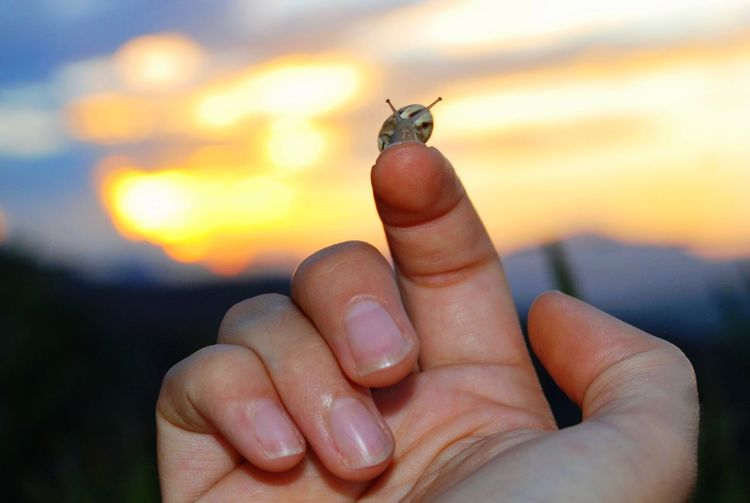 Mountains Horizon Snail Insect Human Hand Fingernail Insect Human Finger Sunset Hand Close-up Sky Finger Personal Perspective Animal Shell Animal Antenna Gastropod Slow
