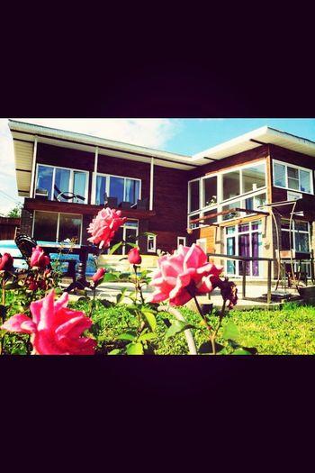 Flower House Home Sweet Home eco Ecohouse