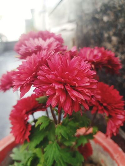 Flower Flowers Flowering Plant Flower Collection Flowers,Plants & Garden Flowers, Nature And Beauty Red Red Flower Flower Head Flower Red Pink Color Springtime Petal Close-up Plant Plant Life Softness In Bloom Blossom Focus