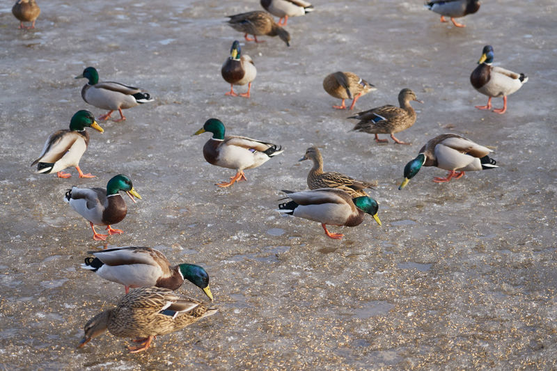 High angle view of birds on the water