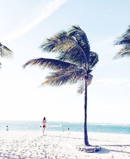 Hello World Taking Photos Relaxing Enjoying Life Sea Tree Photography Holiday♡ Summer Palm