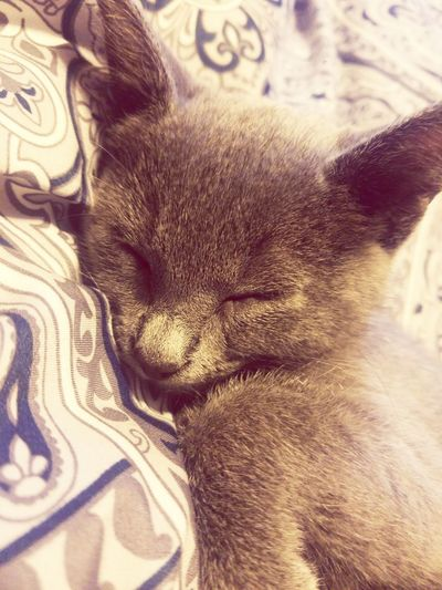 Animal Themes Mammal One Animal Domestic Animals No People Close-up Pets Indoors  Day kitten cat