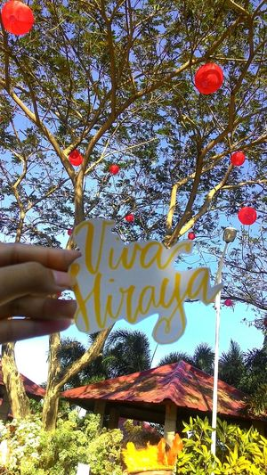 Tree Nature Sky Branch Day Low Angle View Beauty In Nature Close-up Outdoors No People Multi Colored Happy Day Awesome Philippines. Philipine Sun Simple Moment Simple Photography Philippines Typography Lettering Fiat Calligraphie Calligraphy Calligraphyart Fiatlux