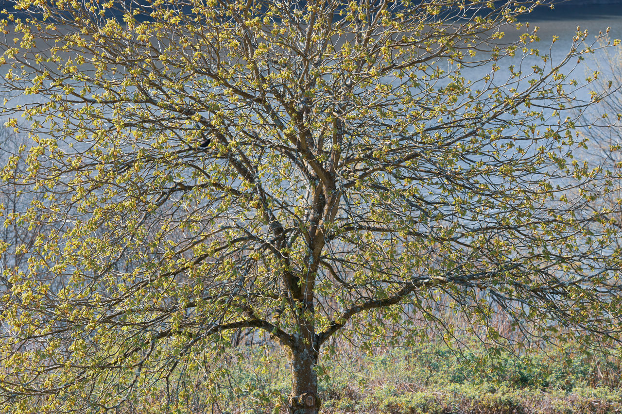 tree, plant, branch, beauty in nature, nature, day, low angle view, no people, tranquility, growth, trunk, tree trunk, outdoors, sky, autumn, full frame, backgrounds, scenics - nature, change, land, tree canopy