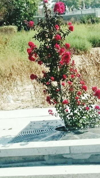 Flowers, side of the road, beautiful, Flower Growth Beauty In Nature Day No People Outdoors