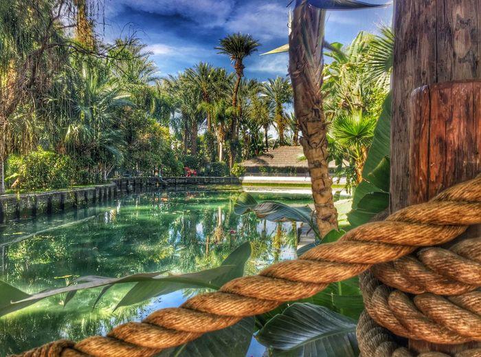 Timages Coachella2016 Coachella Empirepoloclub Medjoollake Medjool Laquinta Palm Trees Palmtrees Palm Springs Palmsprings Palmdesert Ranchomirage Indianwells Popular Photos Popular