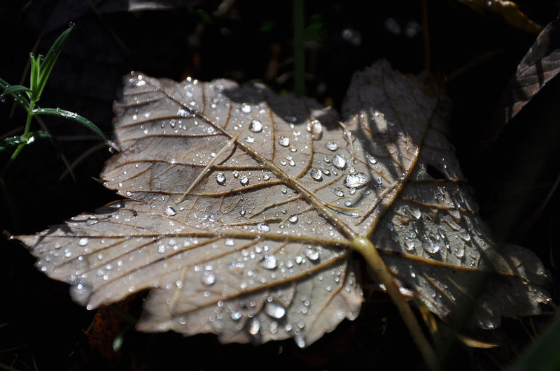 Leaf with rain drops Nature Rain Raindrops Wetland Beauty In Nature Close-up Day Drop Due Fragility Freshness Leaf Leaf Vein Nature No People Outdoors RainDrop Water Wet