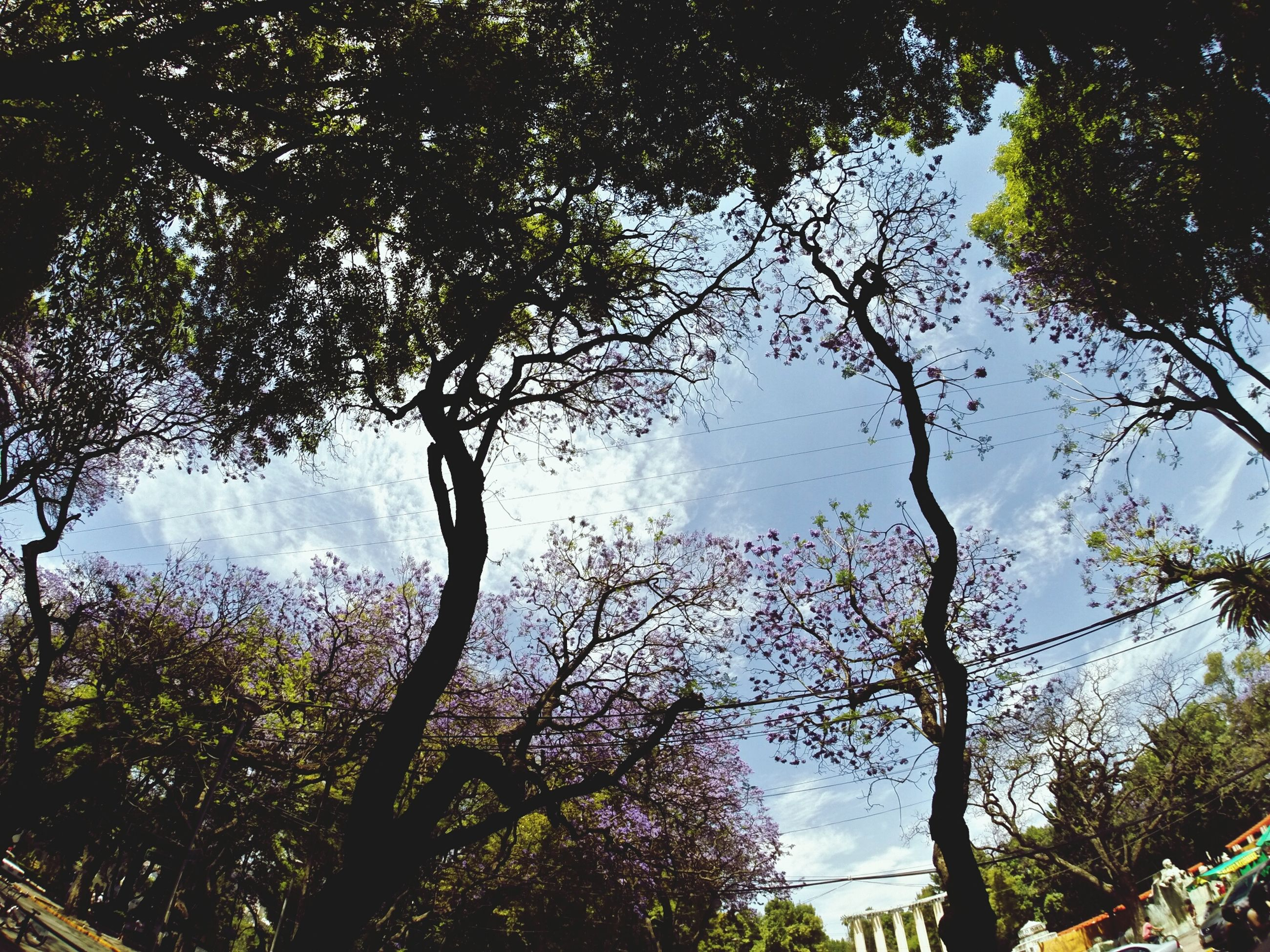 tree, branch, low angle view, growth, sky, building exterior, built structure, nature, architecture, tranquility, silhouette, tree trunk, beauty in nature, no people, scenics, outdoors, day, tranquil scene, treetop, green color