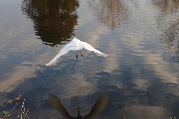High angle view of bird flying over lake