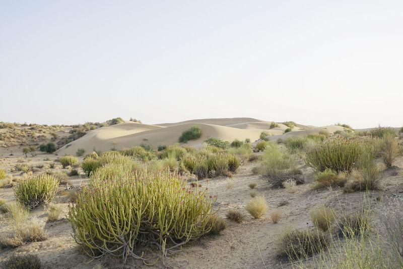 Thar Desert landscape Dunes India Arid Climate Beauty In Nature Desert Jaisalmer Landscape Nature No People Outdoors Plant Sand Sand Dune Scenics Thar Thar Desert Tranquil Scene Vegitation