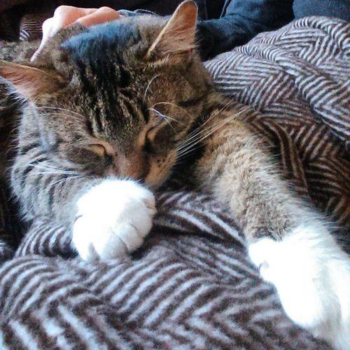 Flauschi 💛 Wassilita_the_cat Schlafendetiere_tsez