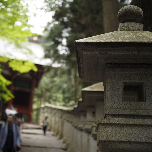 Single Forcus Manual Focus OlympusTaking Pictures Standard Lens Wolf Taking Photos Japanese Shrine Tree