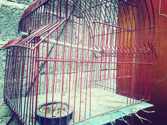 Para aprender a volar hay que salir de la jaula First Eyeem Photo Architecture