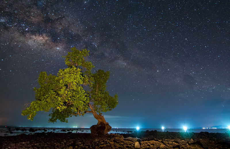 milky way rise above trees Night Star - Space Astronomy Space Sky Scenics - Nature Tree Galaxy Nature Plant Beauty In Nature Tranquil Scene Star Tranquility No People Land Star Field Landscape Environment Outdoors Milky Way