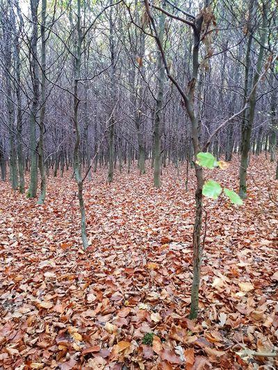 WoodLand Growth