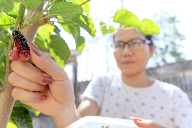 Close-up Day Glasses Headshot Human Hand Mature Adult Mulberry Mulberry Fruit Mulberry Tree Nature One Person One Woman Only Organic Organic Food Organic Gardening Outdoors People Picking Berries Portrait Sunny Tree Women Young Women