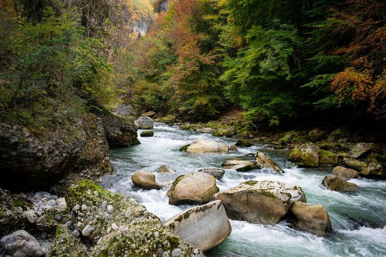 Water Tree Rock