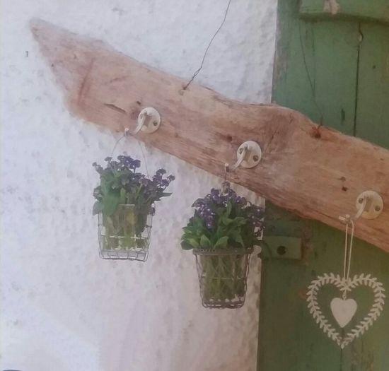 Talking Pictures Streamzoofamily Flowers Beautiful Nature Feeling Good Dekoration Mediterran