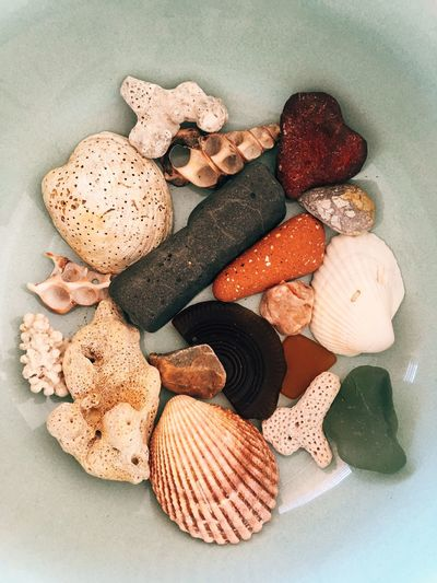 Coastal Decor Interior Beach Shells Ocean Shell Food And Drink Still Life Indoors  Variation Choice Freshness High Angle View Large Group Of Objects Group Of Objects Close-up Indulgence Group Healthy Eating Shell Studio Shot No People Table Wellbeing Fruit