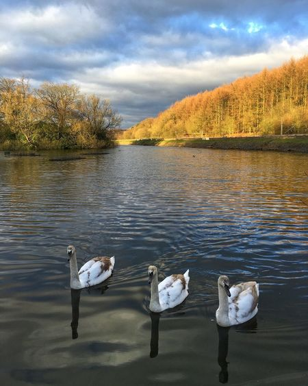 High angle view of swans swimming in lake against sky