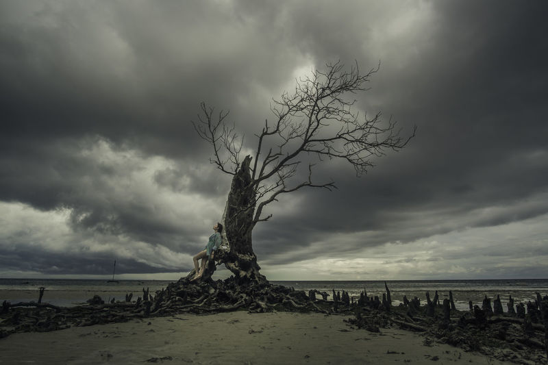 Tree of Decay