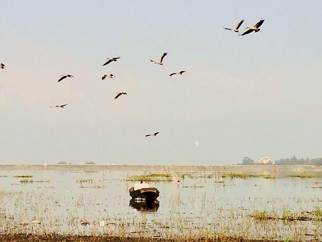 Simplicity Lake Birds Nature Hello World EyeEm Around The World We ❤️ Thailand Travel By Puk✈️