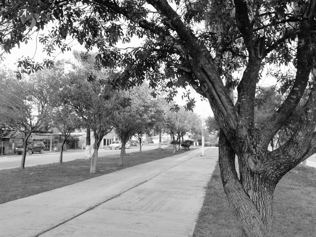 Tree Outdoors Sky Day Nature People Mammal Excercise Time Blackandwhite Blackandwhite Photography Black & White Nopeople City Life Mexico