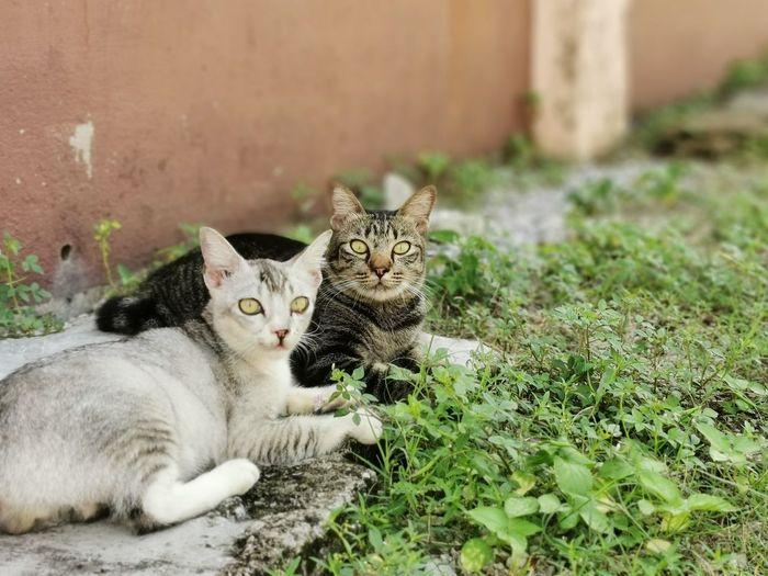 Portrait of tabby cat on plants