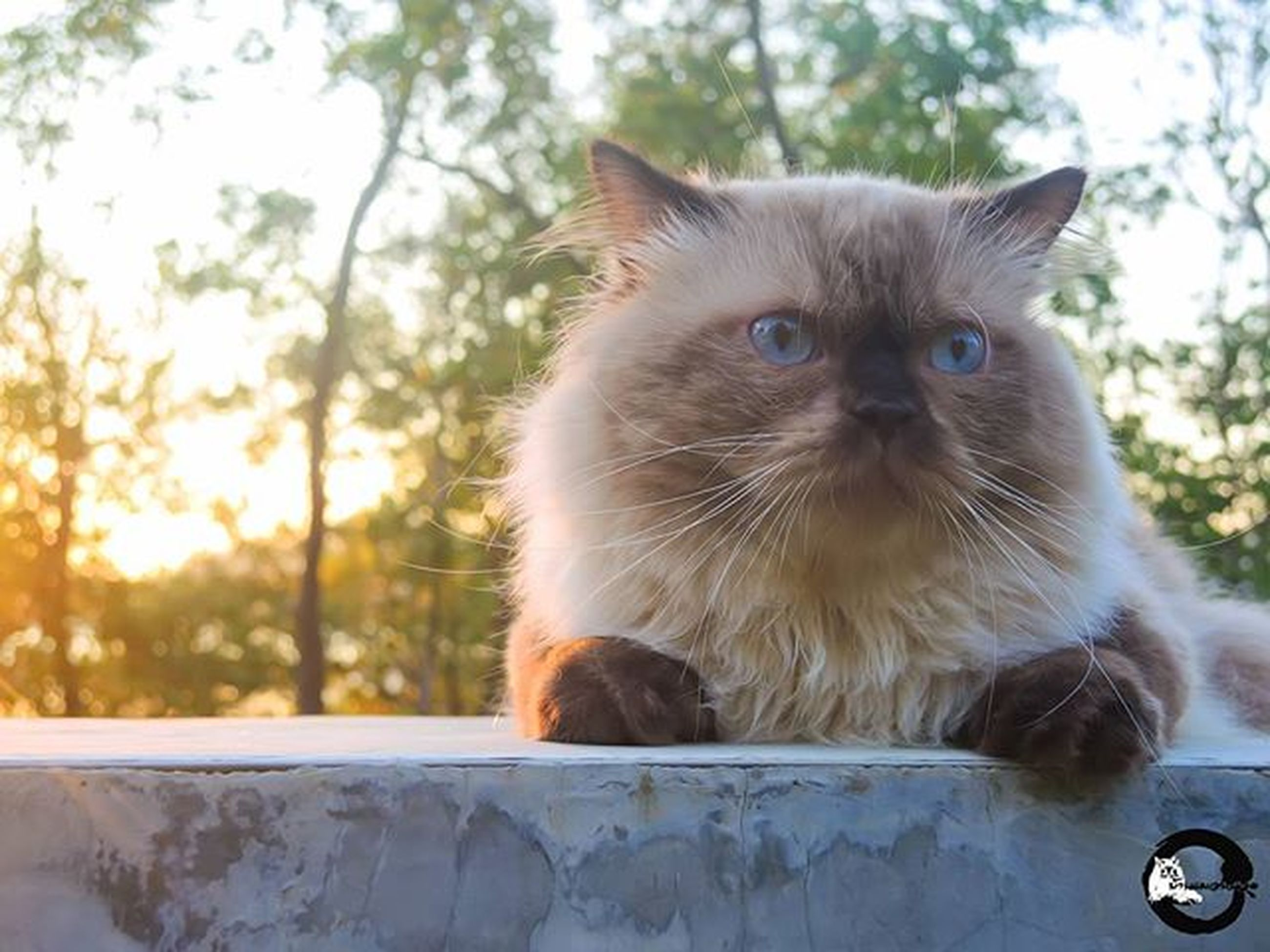 one animal, animal themes, domestic cat, mammal, pets, domestic animals, cat, feline, whisker, focus on foreground, sitting, close-up, looking away, portrait, animal hair, relaxation, outdoors, day, front view