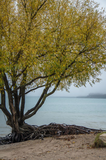 Autumn Branches Calm Gnarly Beach Beauty In Nature Branch Day Fall Growth Horizon Lake Nature No People Outdoors Roots Of Tree Sand Scenics Sea Sky Tranquil Scene Tranquility Tree Water Yellow Autumn Mood