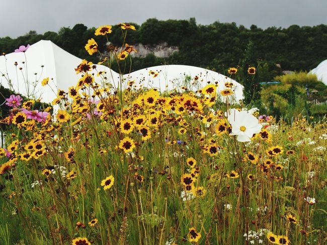 Visit to the eden project last summer The Eden Project Cornwall Summertime Flowers