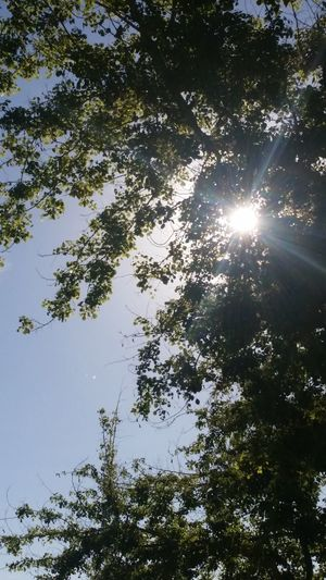 Sun through trees Tree Sunbeam Sun Sunlight Nature Low Angle View Growth Beauty In Nature Sky Tranquility No People Scenics Outdoors Day Backgrounds
