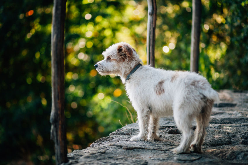 Animal Animal Themes Bokeh Day Dog Dog Love Dogs Domestic Animals Mammal Nature Nature No People One Animal Outdoors Standing Young Animal Pet Portraits