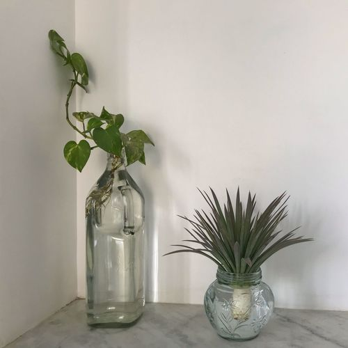 Potted plant on table against white wall
